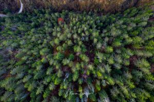 View over trees in Rhodope mountains