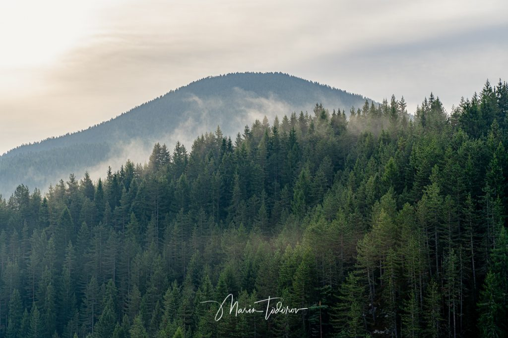 Fog over trees in Rhodope mountains