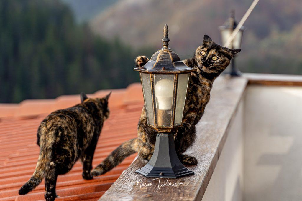 Cats at hotel Mursal